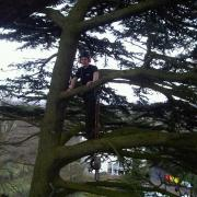 80ft cedar in kidderminster needed a 20% thin and deadwooding