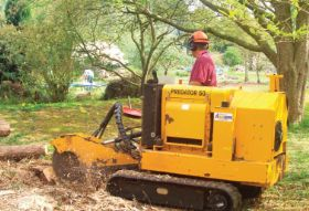 Stump grinding to remove the tree stump in worcester